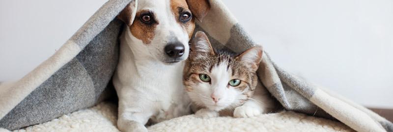 Alarme maison compatible avec animaux domestiques