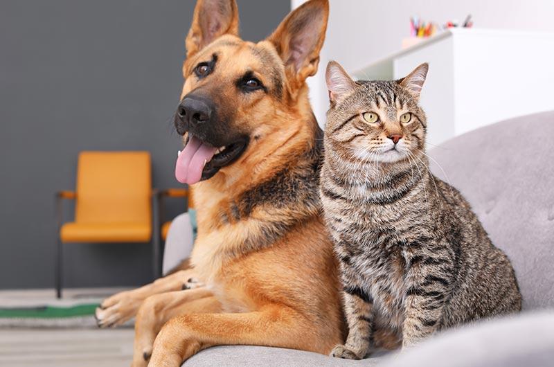 Alarme intrusion compatible avec chiens et chats